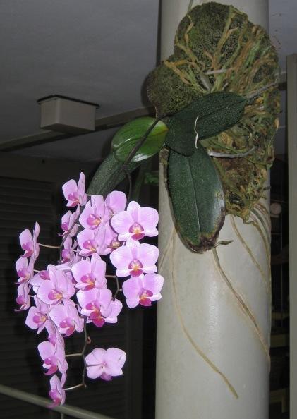 2009-05-19 El Yunque Rainforest 90