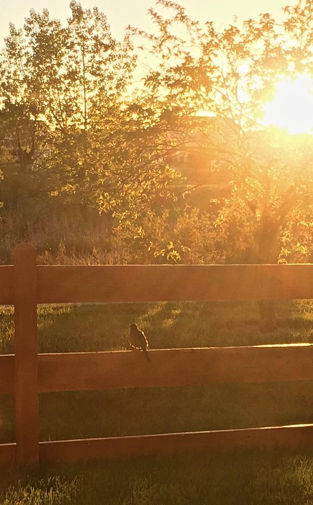 2017-05-24 Sun Robin