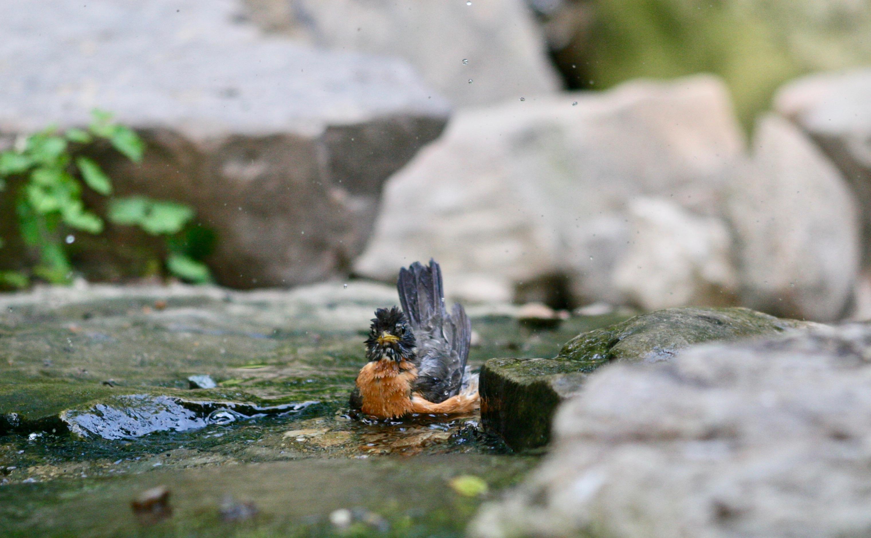 2010-05-16 Robin Splash