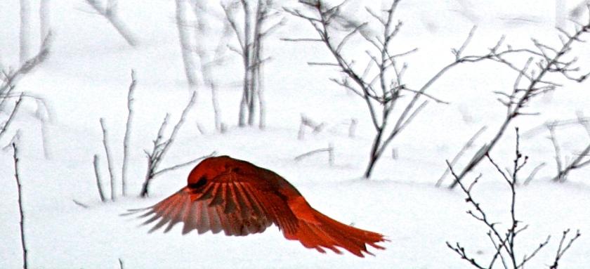 2014-02-13-cardinal-landing