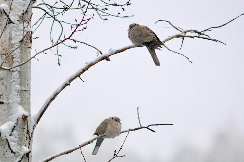 2018-03-31 Doves