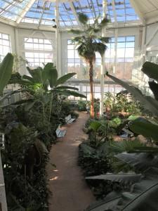 2019-01-26 cbg conservatory 09