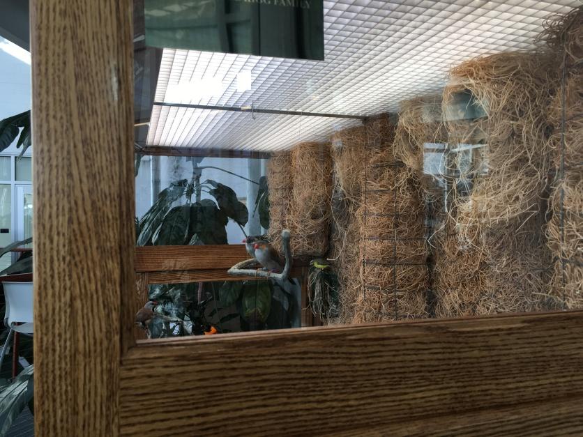 2019-01-26 cbg conservatory 14