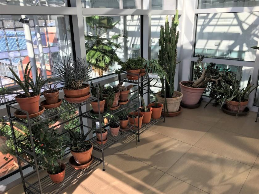 2019-01-26 cbg conservatory 19