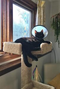 2019-01-31 Tree Cat