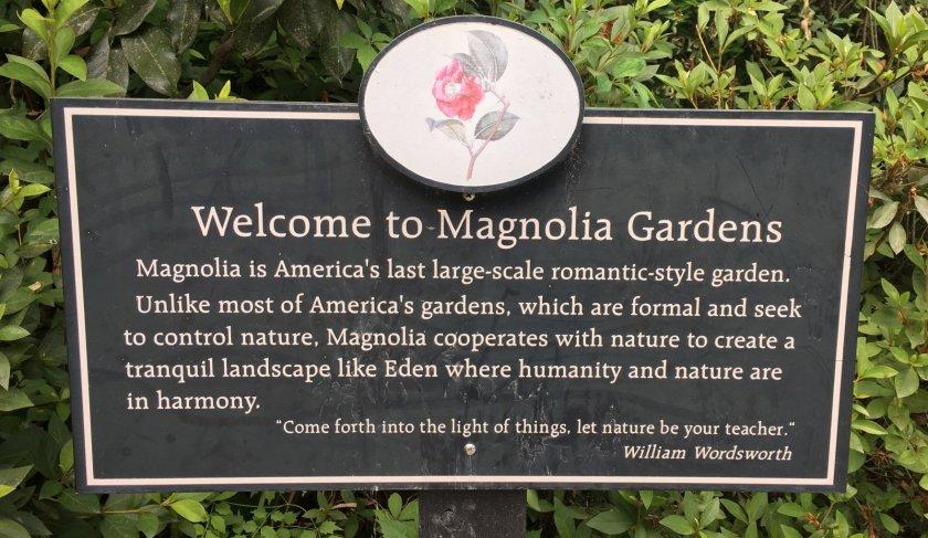 2019-05-19 Magnolia 1